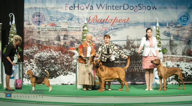 Winter Dog Show 2017